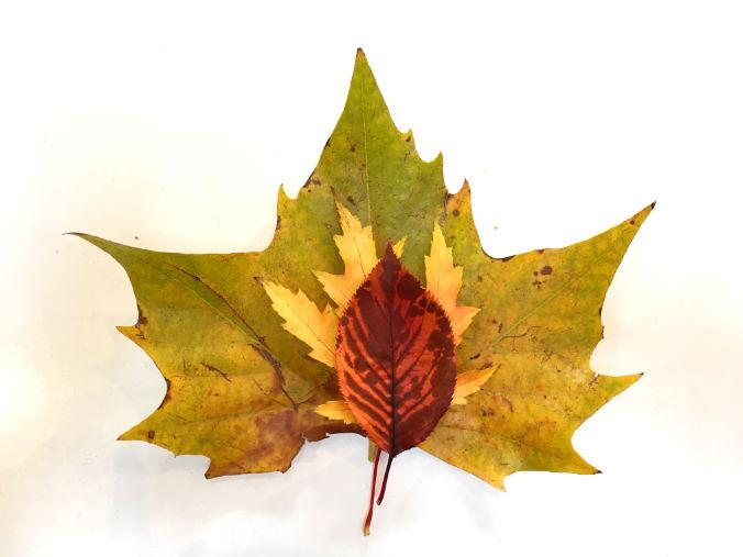 choosing-leaves
