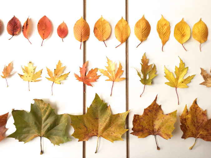 leaves-laid-out